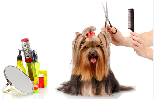 1 dog hair.jpg